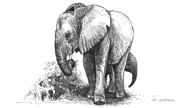7 Cunanan2018 elephant 640
