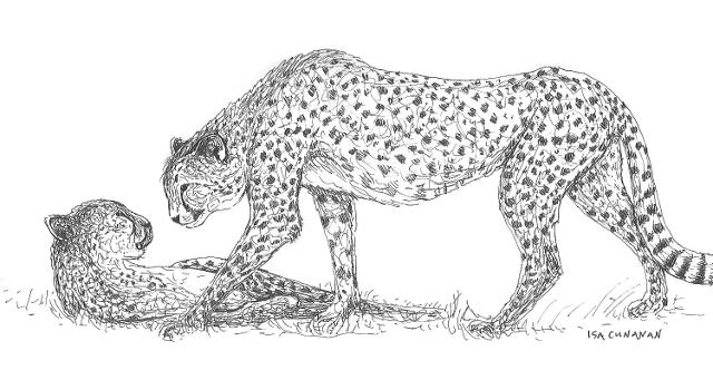 7.5 Cunanan2019 CheetahCouple 640